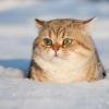 KittyCOW